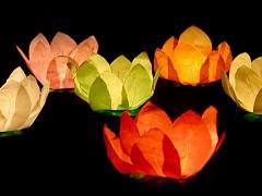 Plovoucí lampion lotosový květ mix barev