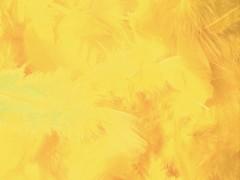 Peří žluté