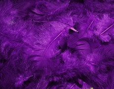 Peří fialové lila