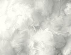 Peří bílé