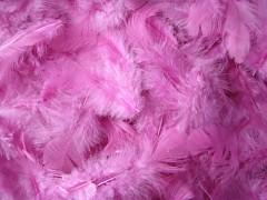 Peří fialovo růžové