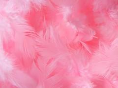 Peří světle růžové