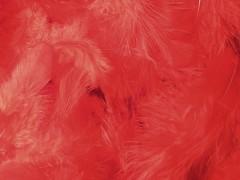 Peří rudé