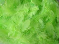Peří světle zelené