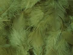 Peří olivově zelené