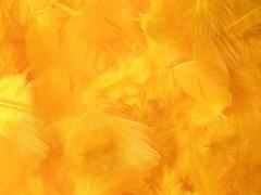 Peří sytě žluté