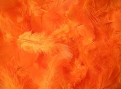 Peří oranžové