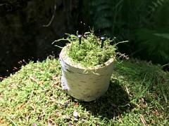 Březový špalíček s hřebíčky na prstýnky s mechem