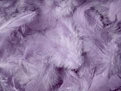 Peří světle šedofialové lila