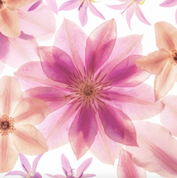 Ubrousky Pressed flowers 20 ks